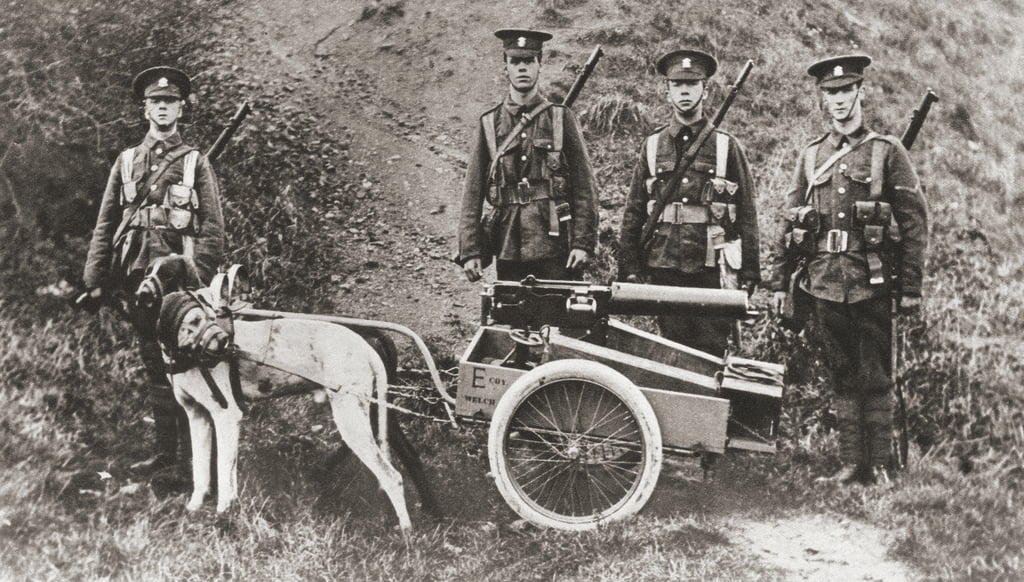 Britische Armee mit Hunden, um eine Maschinengewehr während des Ersten Weltkrieges zu ziehen, aus The Illustrated War News, 1915 von English Photographer