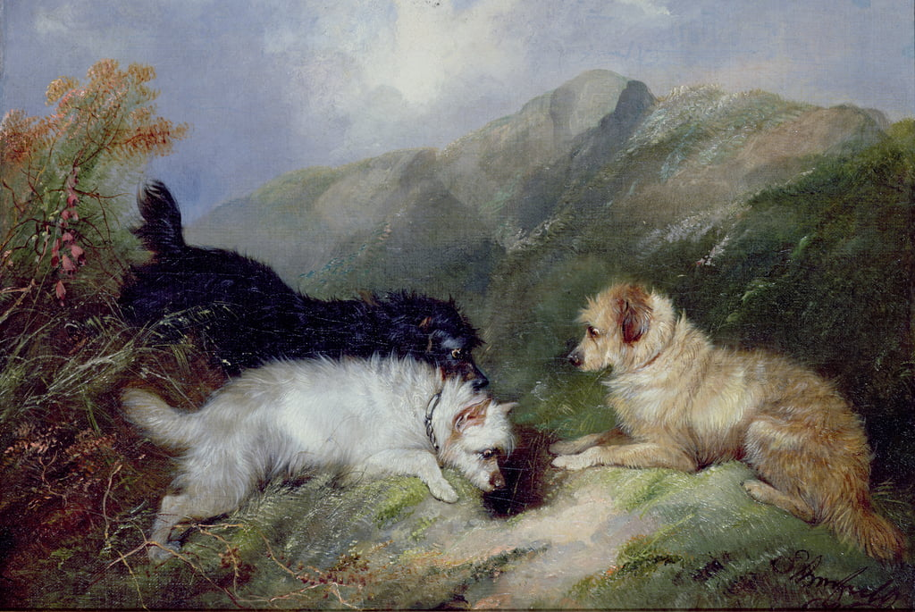 Terriers Rabbiting von George Armfield