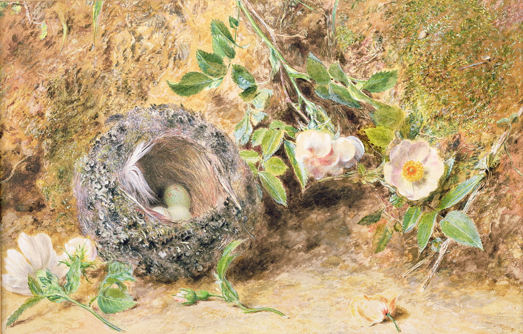 Stilleben mit Chaffinch Nest von William Henry Hunt